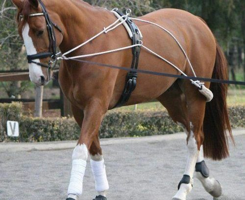 White Horse Equestrian Pessoa Lunging Schooling System Training Aid One Size